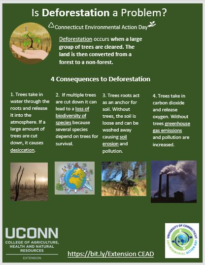 Is Deforestation a Problem.